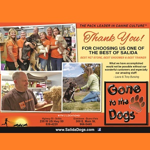 Gone to the Dogs – November – Thank You!