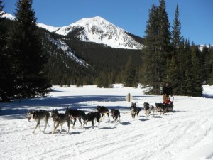 Dog-sled1-1024x768